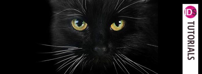 rich black true black print indesign